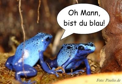 frosch_blau.jpg